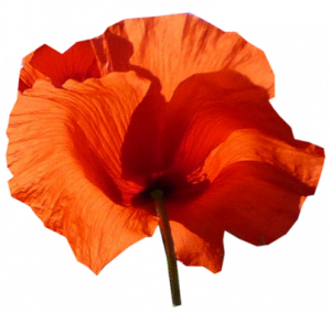 coquelicot+6.png